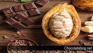 Kebun Cokelat Termahal di Dunia