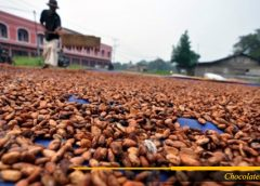 Proses produksi biji coklat