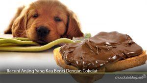 Racuni Anjing Yang Kau Benci Dengan Cokelat